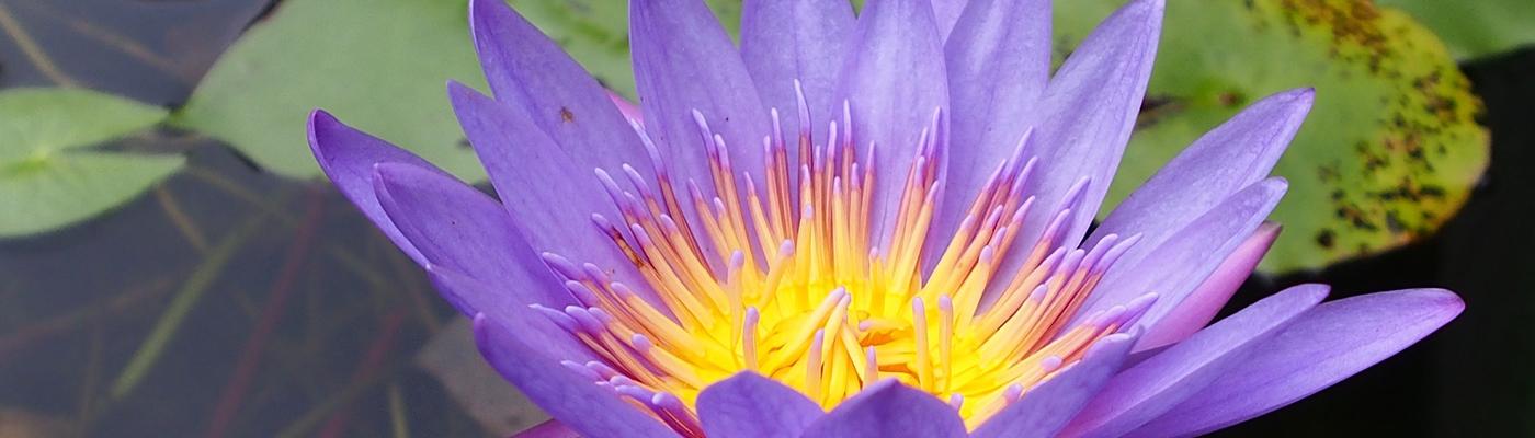 lotus 1400x400
