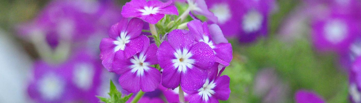 flowers 1400x400