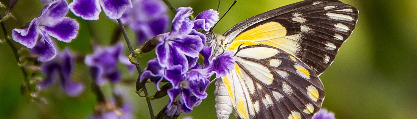 vlinder 1400x400